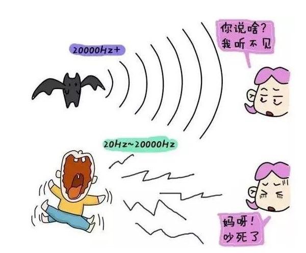 超声波骨密度仪的技术原理